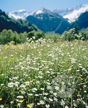 alps meadow